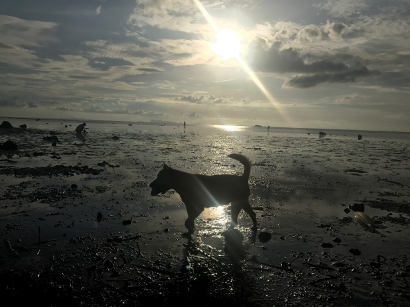 koh_phangan-sunset-dog