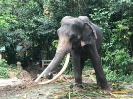 koh_samui-elefant