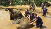 chiang_mai-elefanten-baden