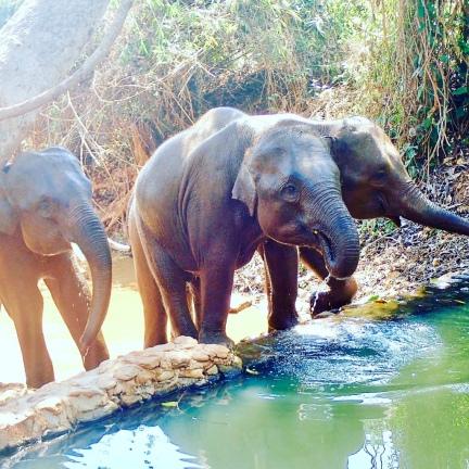 chiang_mai-elephants