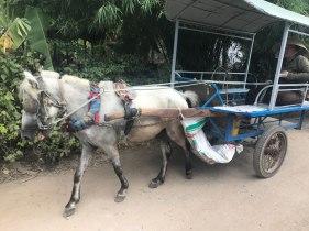 mekong-delta-kutschfahrt