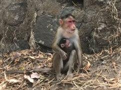 Mumbai-Monkeys