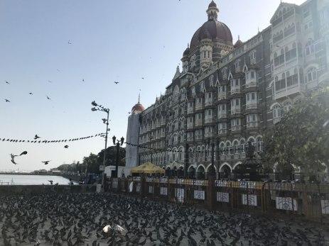 Mumbai-Taubenrennen