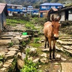Nepal-Tag03-Poonhill