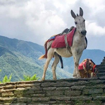 Nepal-Tag04-Errekt