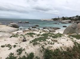 pinguine-beobachten