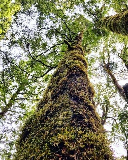 Der-Wald