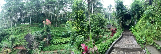 Kaffee-und-natur