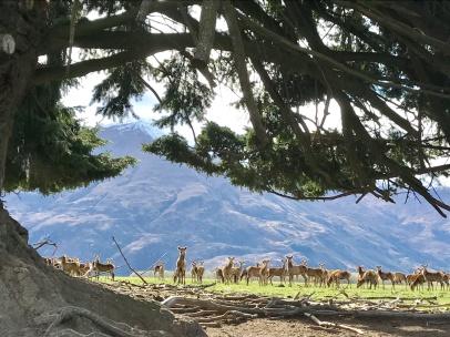 Mount-Aspiring-Freiwild